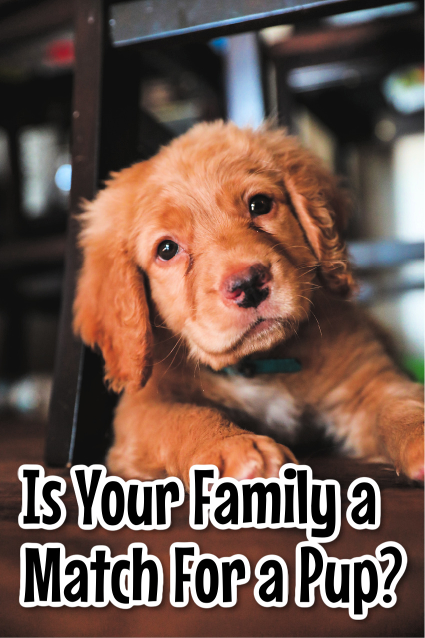 Making Sure Your Family Is A Match For A Four-Legged Friend #pets #adoptdontshop #rescuepups