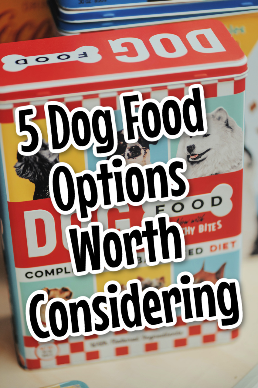 5 Different Dog Food Options Worth Considering For Your Pup