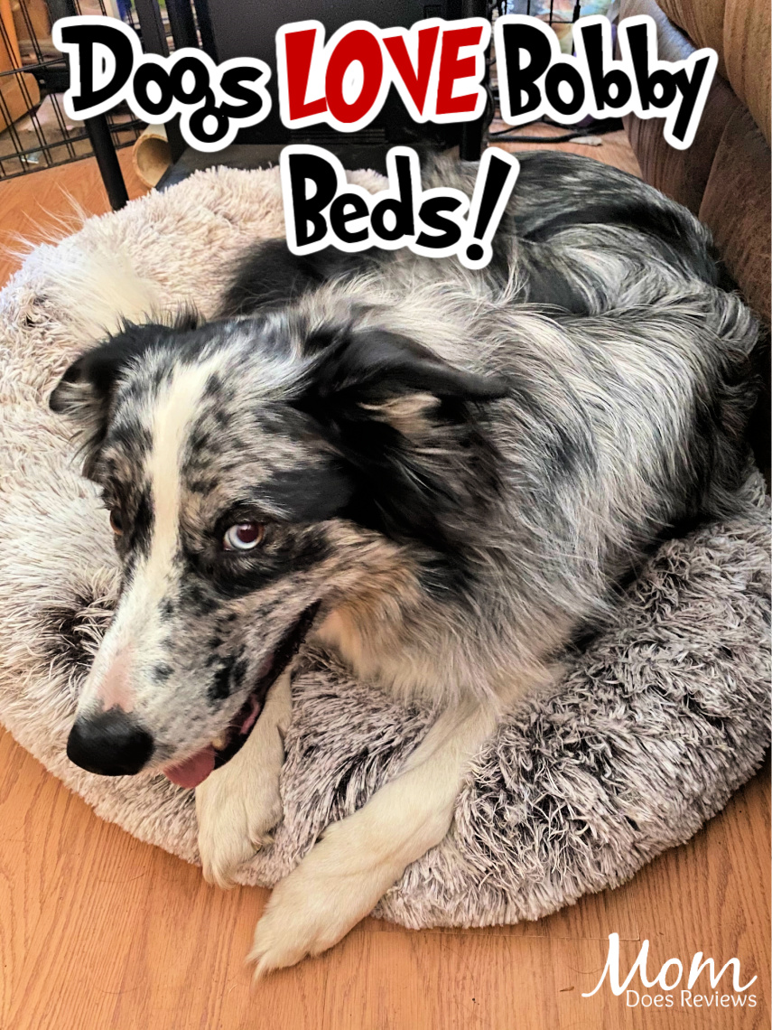 Comfy and Cozy Bobby bed for pups
