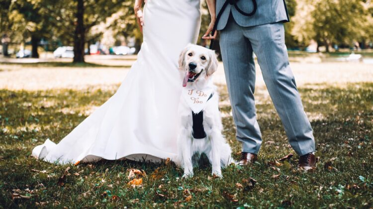 Fun Ways To Make Your Dog Part Of Your Wedding