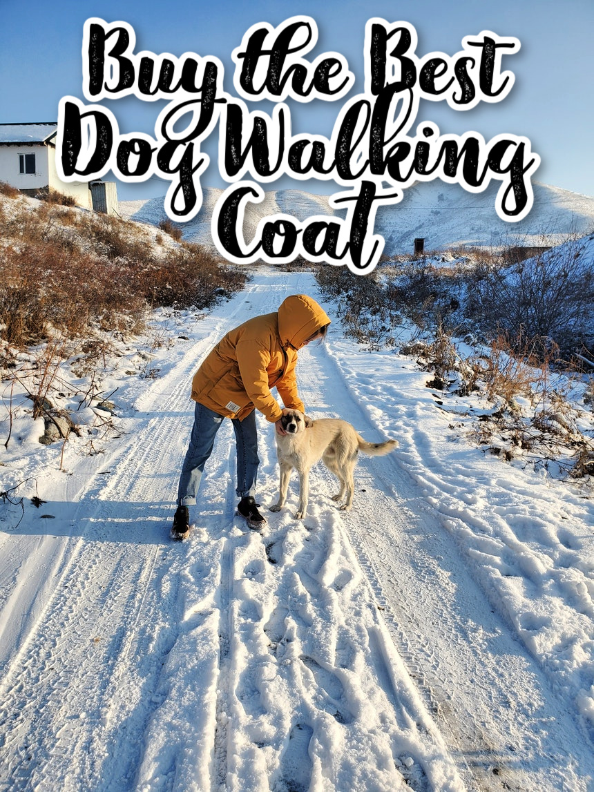Buy the Best Dog Walking Coat