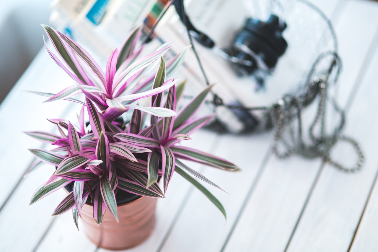 Amateur Gardener: 6 Indoor Plants That Are Difficult to Kill