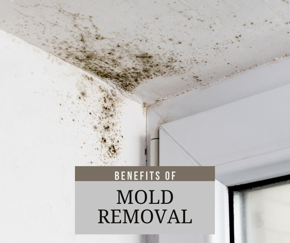 The Benefits of Mold Removal