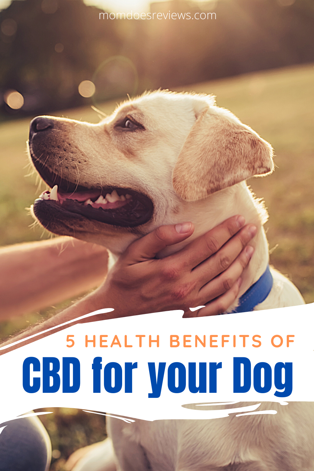 5 Health Benefits of CBD for Your Dog