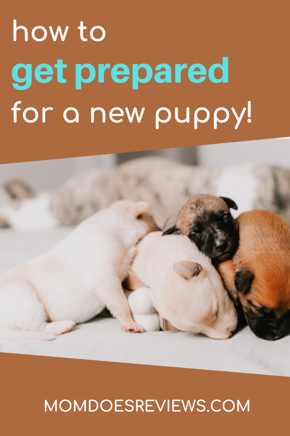 Getting Prepared For A New Puppy In Your Life