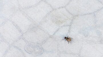 What to Do When You Discover a Pest Problem in the Home