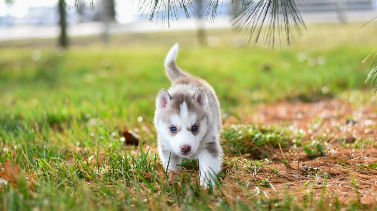 Getting Prepared For A New Puppy In Your Life #pets #Puppyraising #puppytraining