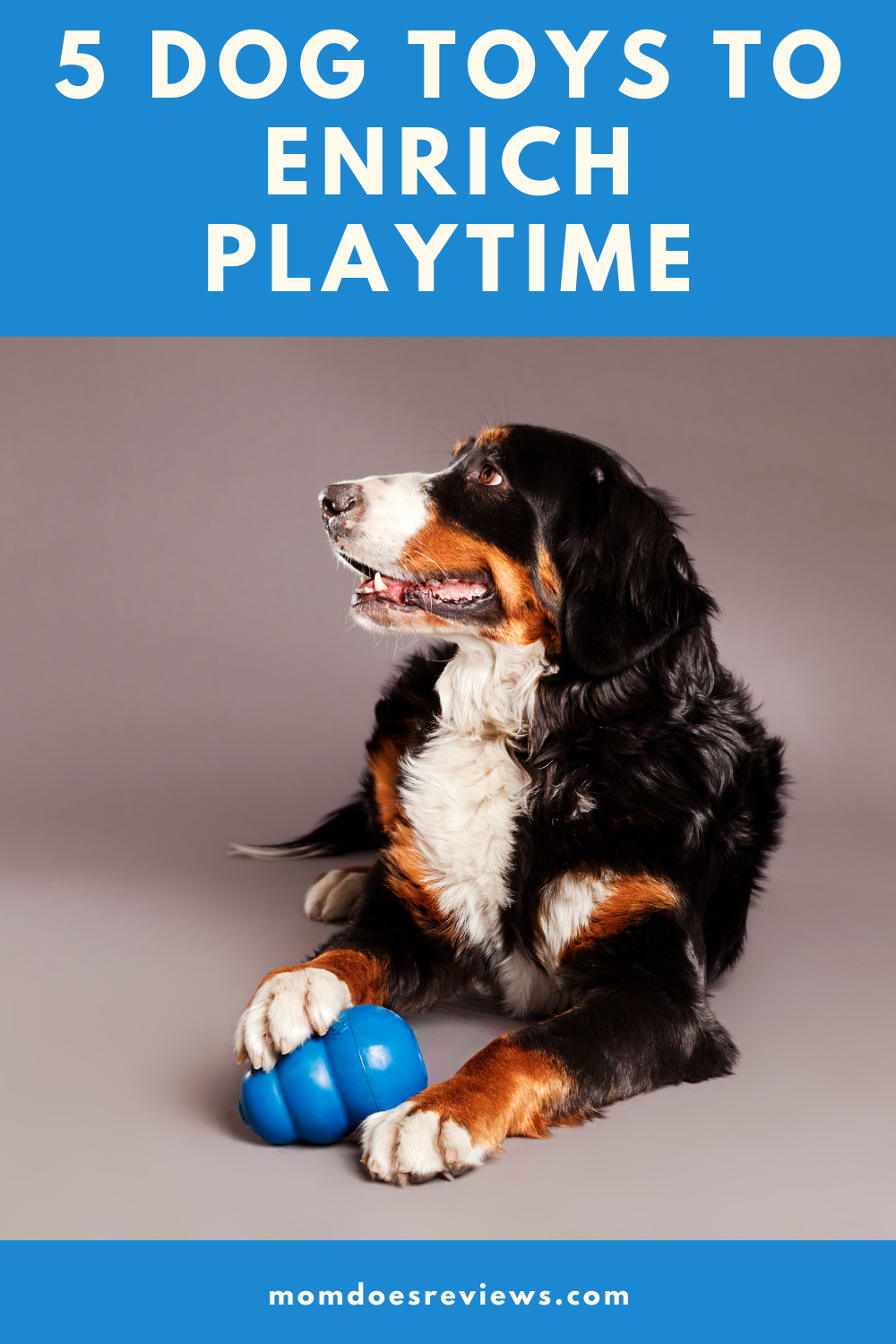 5 Great Toys to Enrich Your Dog's Playtime