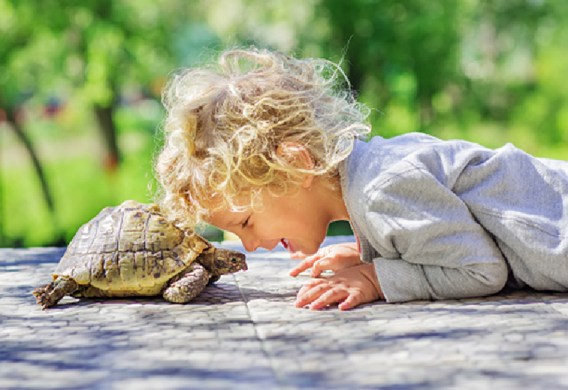 5 Low-Maintenance Pets for Your Kids