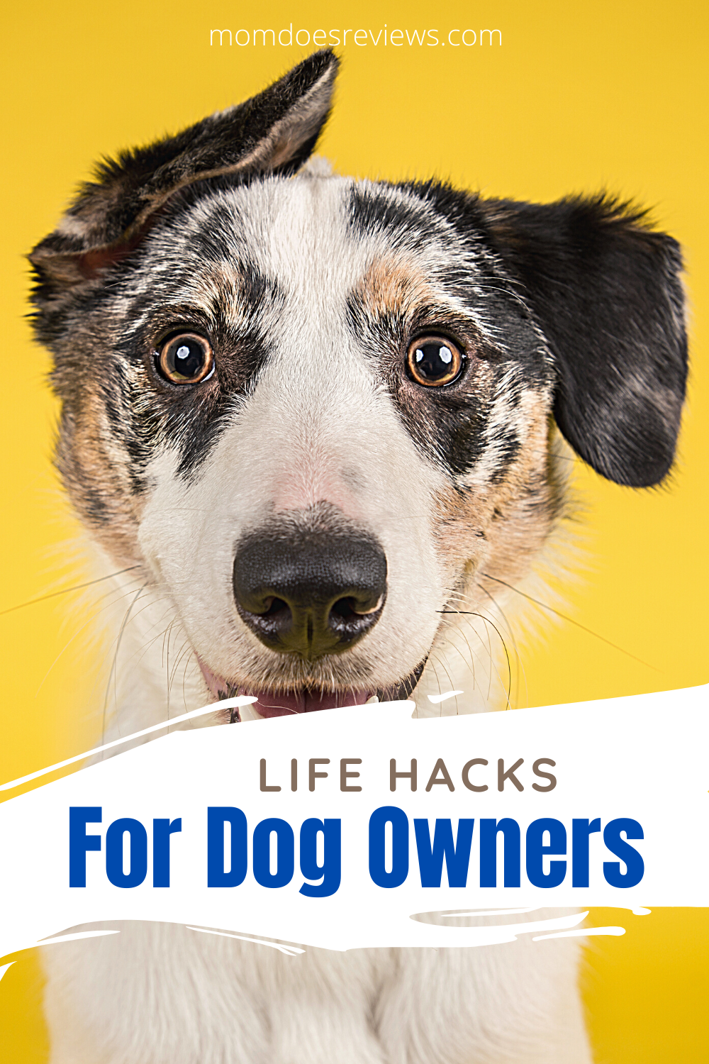 Life Hacks For Dog Owners