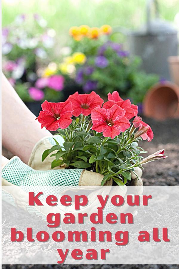 A Summer Flower Garden for All Seasons