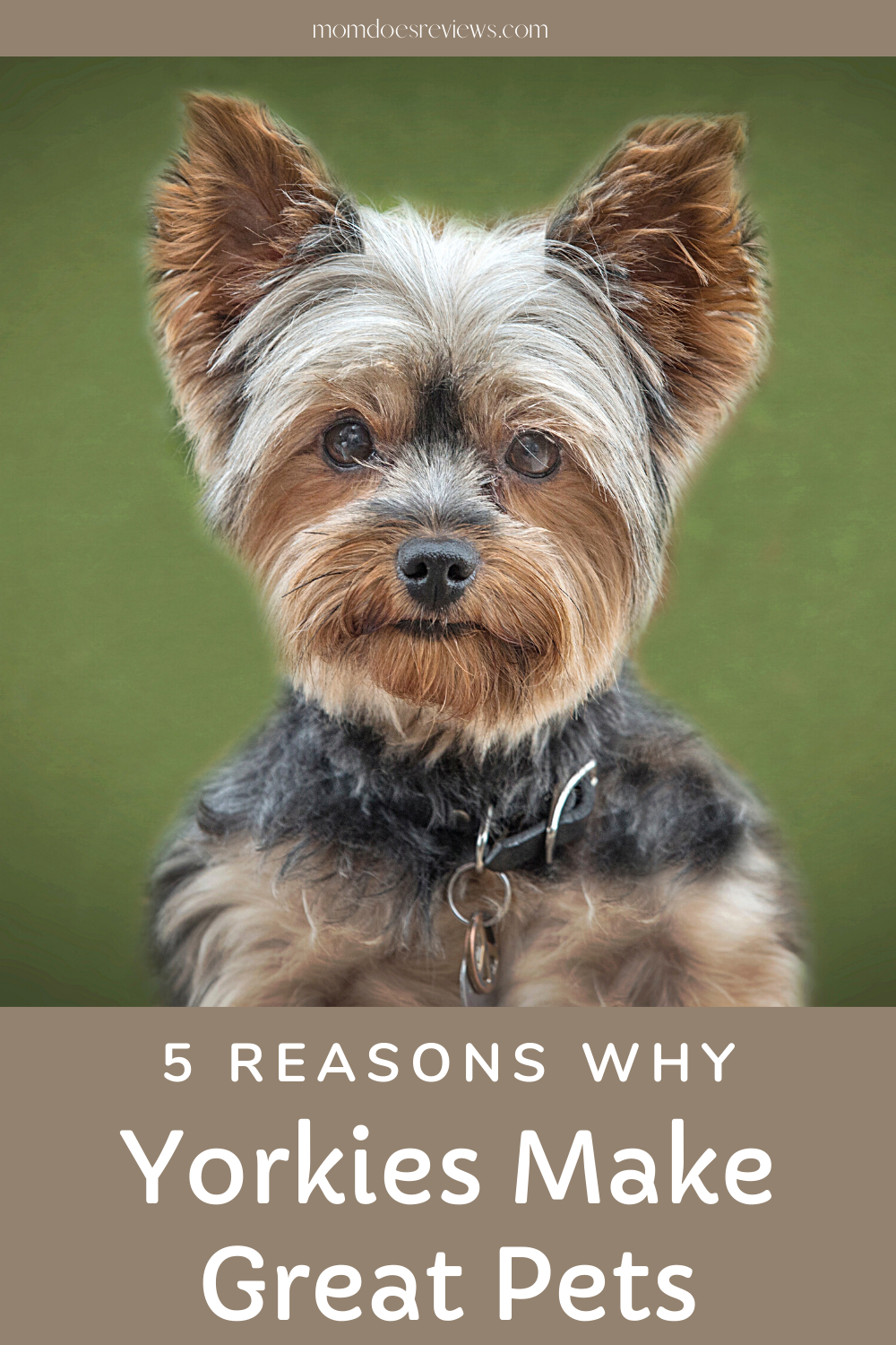 5 Reasons Why Yorkies Make Great Pets for Millennials