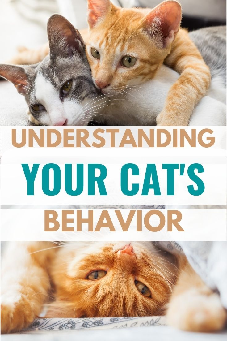 Understand Your Cat's Behavior: A Guide