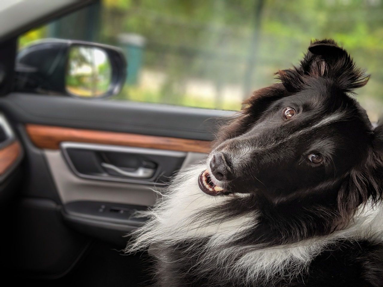 6 Tips for a Great Road Trip with Your Dog