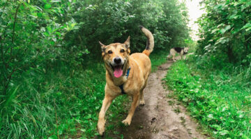 How To Choose The Right Dog For Your Homestead