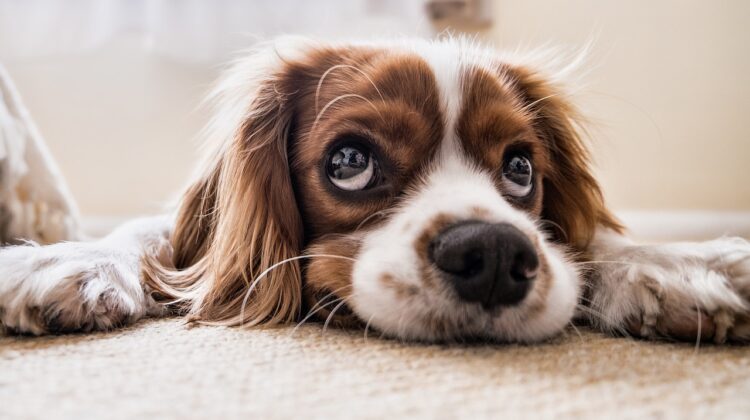 What Are The Best Pet Hotels In Pittsburg?